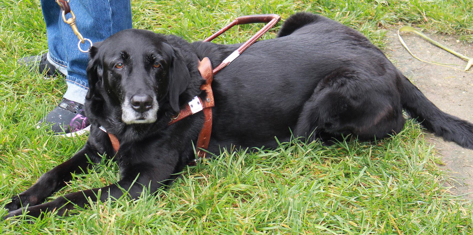 Dog Training Directories
